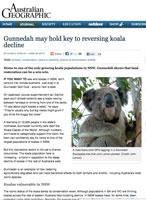 Gunnedah-koala